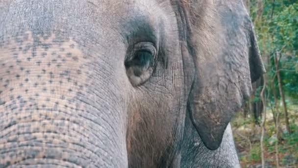 Arc, egy elefánt. A szem villog, a textúra a bőrön, a nagy trunk. Thaiföld