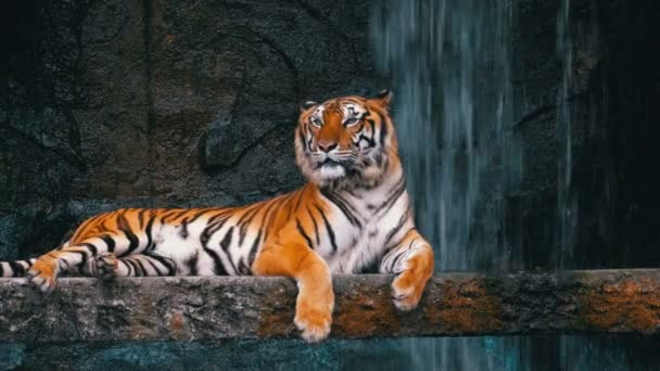 The Tiger Lies on the Rock near the Waterfall. Thailand