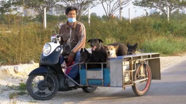hunde sitzen in einem anh nger von einem thai motorrad mit. Black Bedroom Furniture Sets. Home Design Ideas