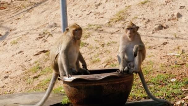 Dvě opice sedí u silnice v národním parku. Thajsko