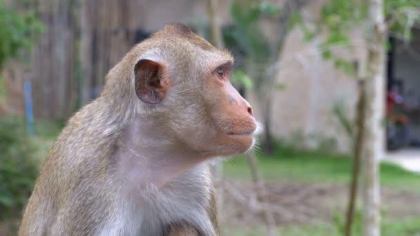 Affen stehen im Dschungel. Thailand