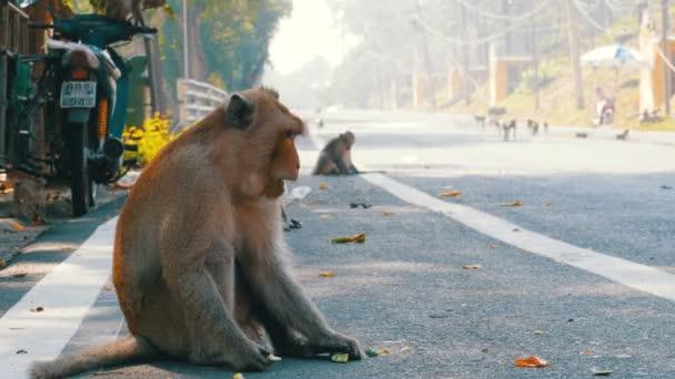 Affen auf der Straße des Dschungels in Thailand