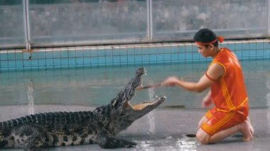 Crocodile show at Famous Pattaya Crocodile Farm. Thailand. Man in the cage with crocodiles