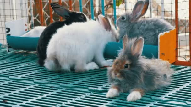 Many colored fluffy rabbit in zoo cage. Tiger Park Pattaya. Thailand