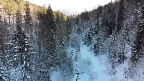Repül át a téli tűlevelű Kárpát-erdőn, közel a fák tetejéhez a havas hegyekben.