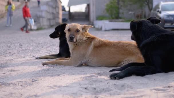 Hajléktalan Kutyák csoportja fekszik az utcán és játszik. Három őr kutya a parkolóban