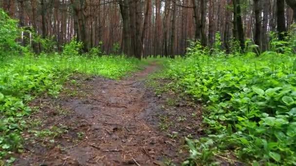 Kráčet po stezce v Zeleném lese. Pov of Hiker Walking on wood Trail.