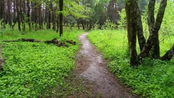 Pěší túra po stezce Zeleným lesem. Kráčet po pěšině v lese