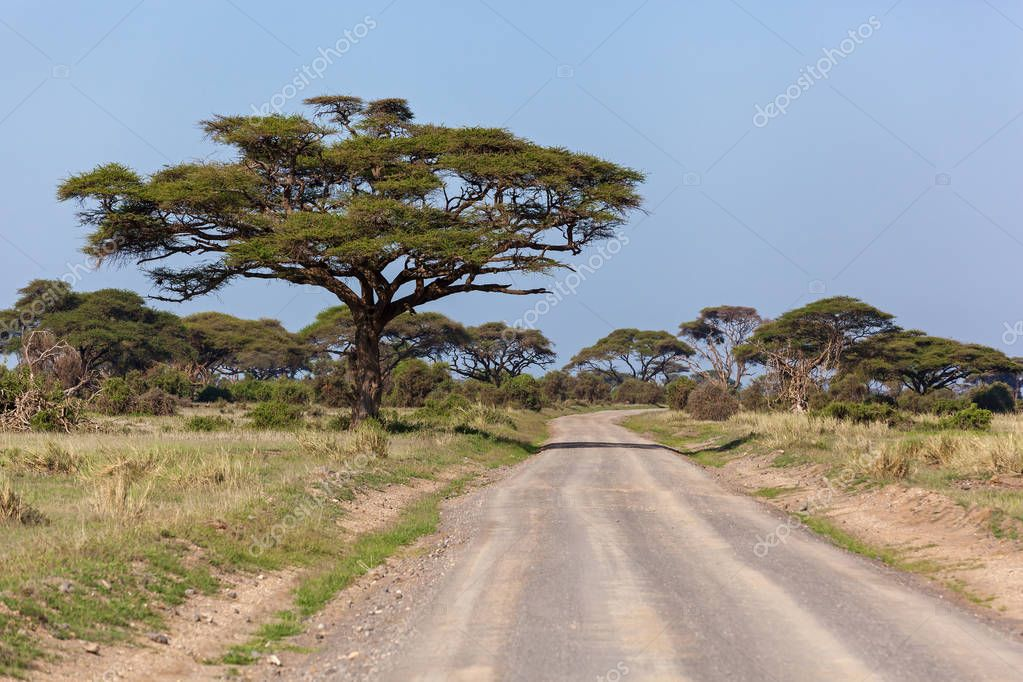 Landscapes of Kenya