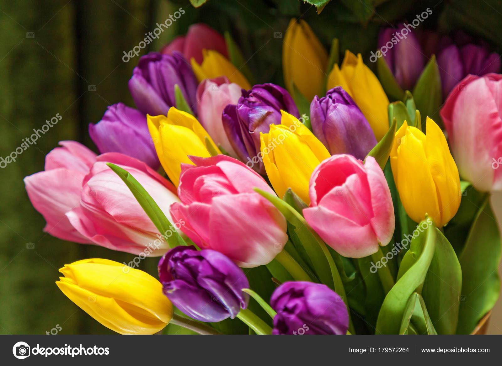 04e6d4d091 Tulipán Lila Sárga Rózsaszín Sötét Zöld Alapon Tulipán Csokor — Stock Fotó