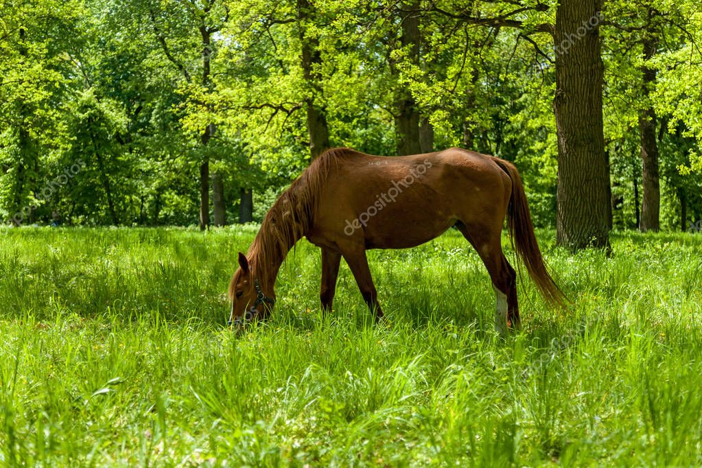 Horse in spring pasture. The horse eating the green grass at the spring meadow