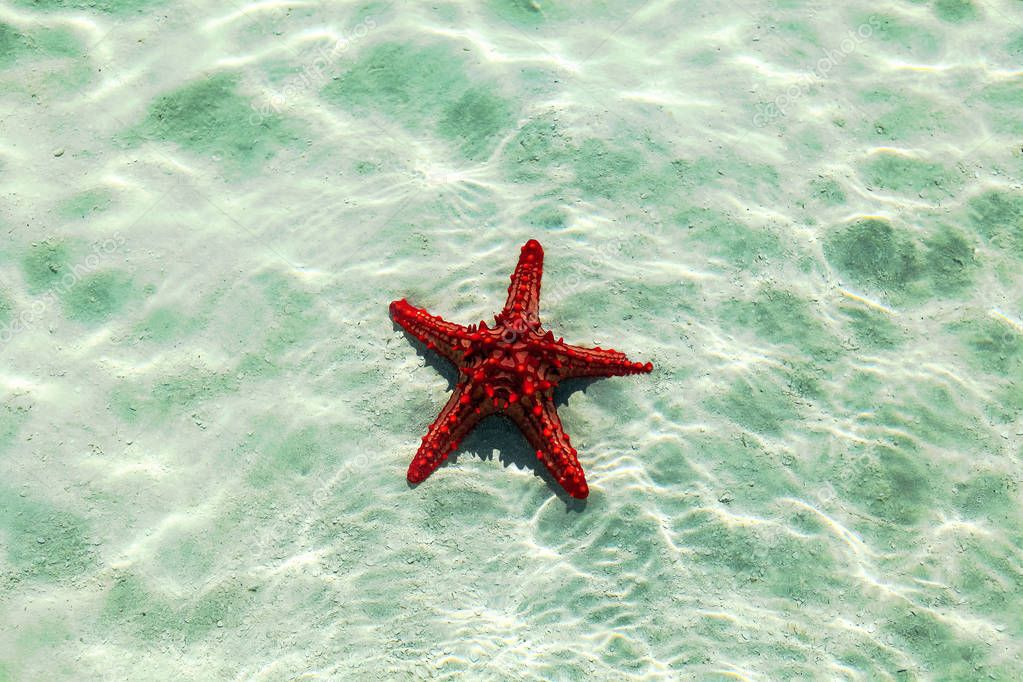 Starfish in water with light reflection.Vintage background for design and creativity can be used as cover for brochures or wallpapers