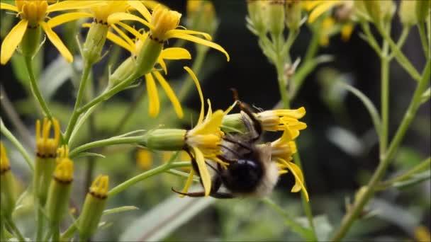 Včela na žluté květině v lese