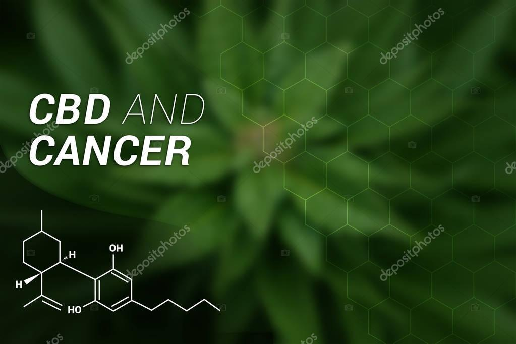 CBD and Cancer | CBD Cannabidiol | Medical Marijuana | Cannabis