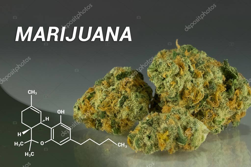 Cannabis | Marijuana | Medical Marijuana | Weed