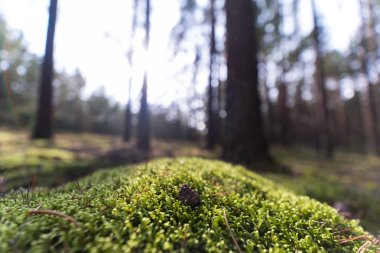 Moss in the forest. Blur background. Autumn season with saturate