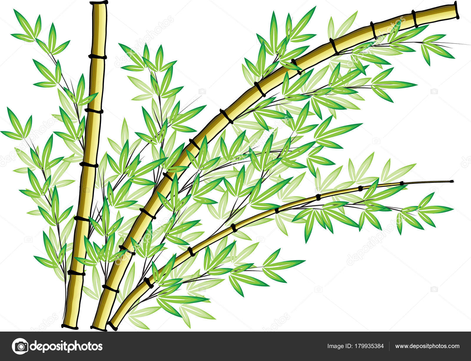 Bamboo Art Design : Bamboo drawing design pixshark images