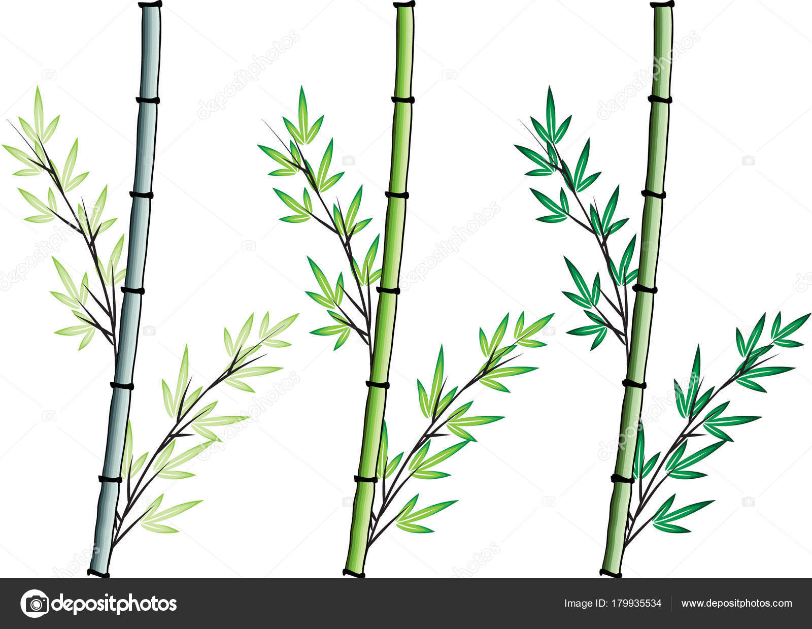 Bambus Zeichnung Design Vektor Stockvektor C Wenpei 179935534