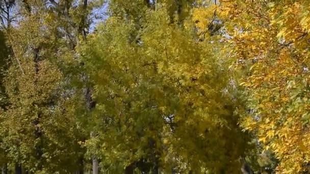 Šustění listí stromů v parku na podzim. Pohyb větru v listí