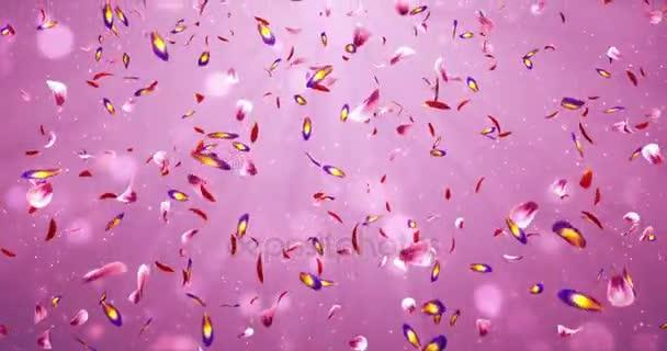 Klesající romantické červené růžové fialové Sakura květů světle pozadí smyčky 4k