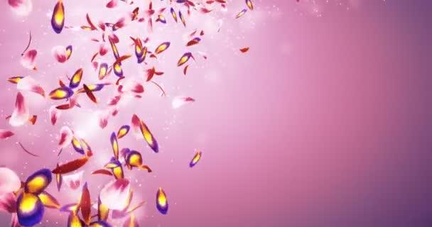 Klesající romantické červené růžový fialový květ plátky Bokeh zástupný smyčka 4k