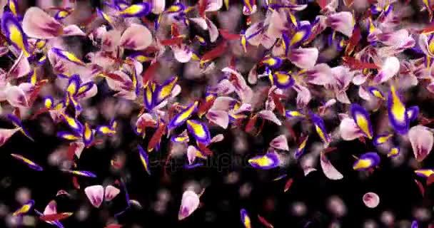 Padající růžové fialové Sakura Flower lístků světlo přechod Alfa podkladu smyčka 4k