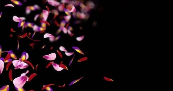 Padající Pink Purple Flower okvětní lístky rozmazaný Bokeh zástupný symbol Alfa podkladu smyčka 4k