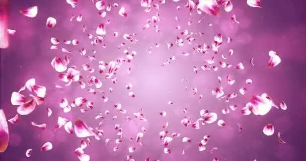 Létající romantické červené růžové Rose Sakura okvětní pádu pozadí smyčka 4k
