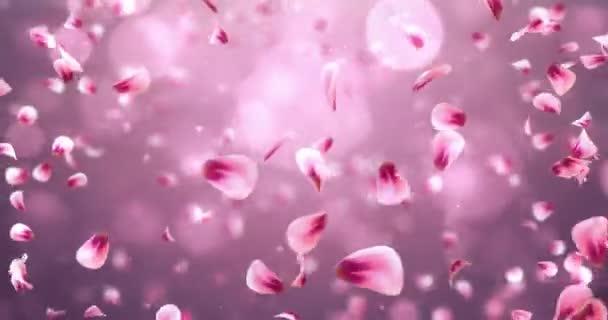 Vír, létající romantické červené růžové Rose Sakura květinu okvětní lístky pozadí smyčky 4k