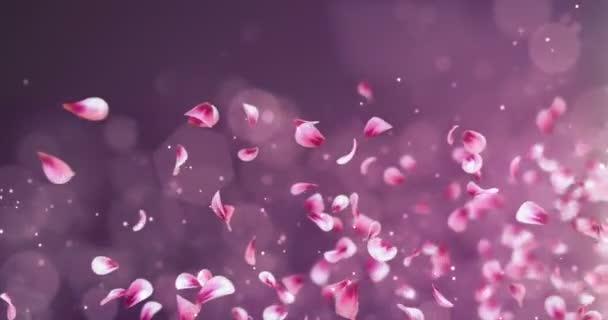 Létající romantické červené růžové Rose Sakura okvětní pádu zástupný symbol smyčka 4k