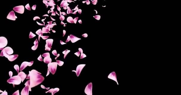 Letící růžové Rose Sakura Flower okvětní lístky padající zástupný symbol Alfa podkladu smyčka 4k
