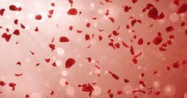 Létající romantické světle červená růže okvětní pádu pozadí smyčka 4k