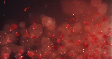 Létající romantické růže květ tmavě červené lístky, které spadají zástupný symbol smyčka 4k