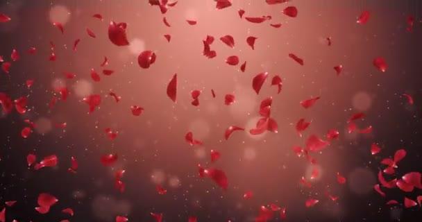 Létající romantické růže květ tmavě červené lístky, které spadají pozadí smyčka 4k