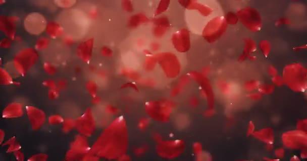Vír, létající romantické tmavě červený květ růže okvětní lístky pozadí smyčky 4k