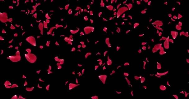 Létající romantické Red Rose Flower okvětní lístky padající pozadí Alfa podkladu smyčka 4k