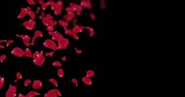 Létající rozmazaný Red Rose Flower okvětní lístky padající zástupný symbol Alfa podkladu smyčka 4k
