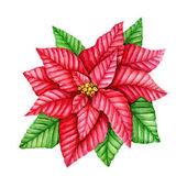 aquarell weihnachtsstern blume stockfoto 125229696. Black Bedroom Furniture Sets. Home Design Ideas