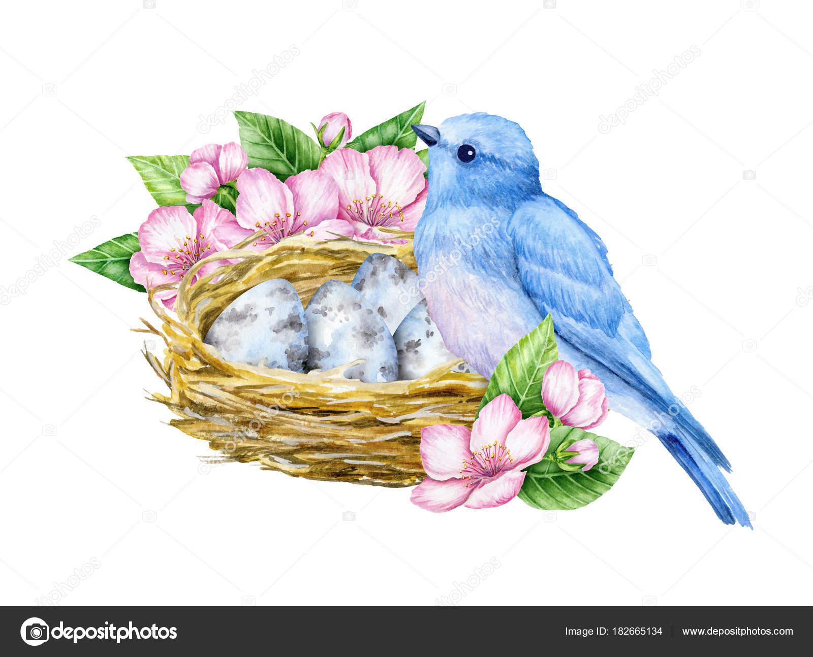 かわいい青い小鳥の巣と青い卵 水彩イラスト かわいい動物や鳥 春の