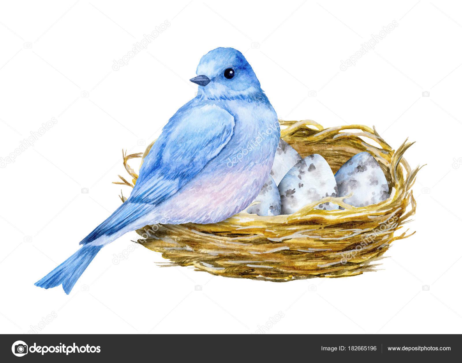 Yuva Mavi Yumurta Ile şirin Küçük Mavi Kuş Sulu Boya Stok Foto