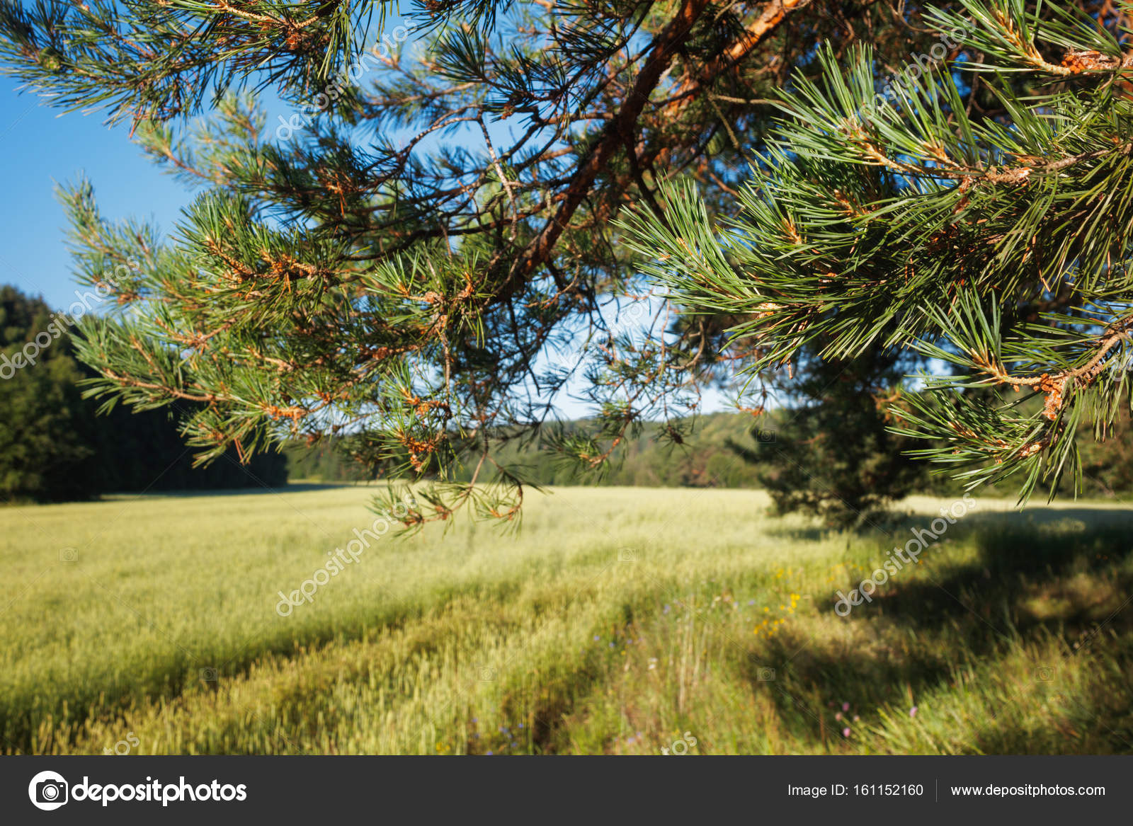 Paysage Concept paysage concept fond, champ, rayons de soleil à travers la cime des