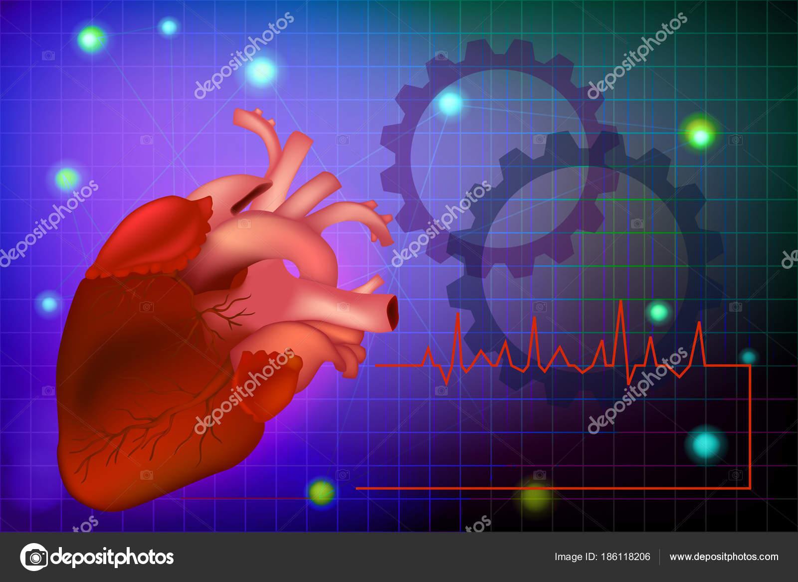 Vektor Infografik Realistischen Menschlichen Herzen Anatomie Des ...