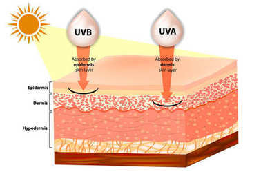 UVB and UVA explained.  Filtering of rays Sun Protection. Penetration into the human skin.