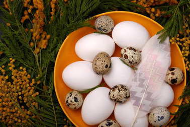 Close up of easter chicken and quail eggs in dish with mimosa flowers and abstracted feather on wooden background