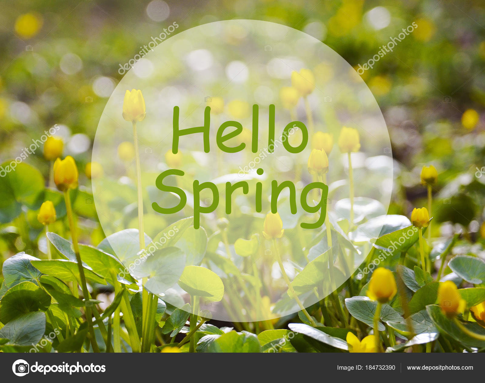 Hello Spring Field First Yellow Spring Flowers Springtime Concept