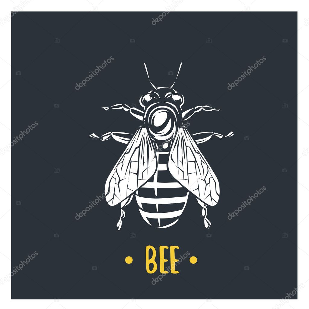 Bee illustration. Vector logotype isolated on white background.
