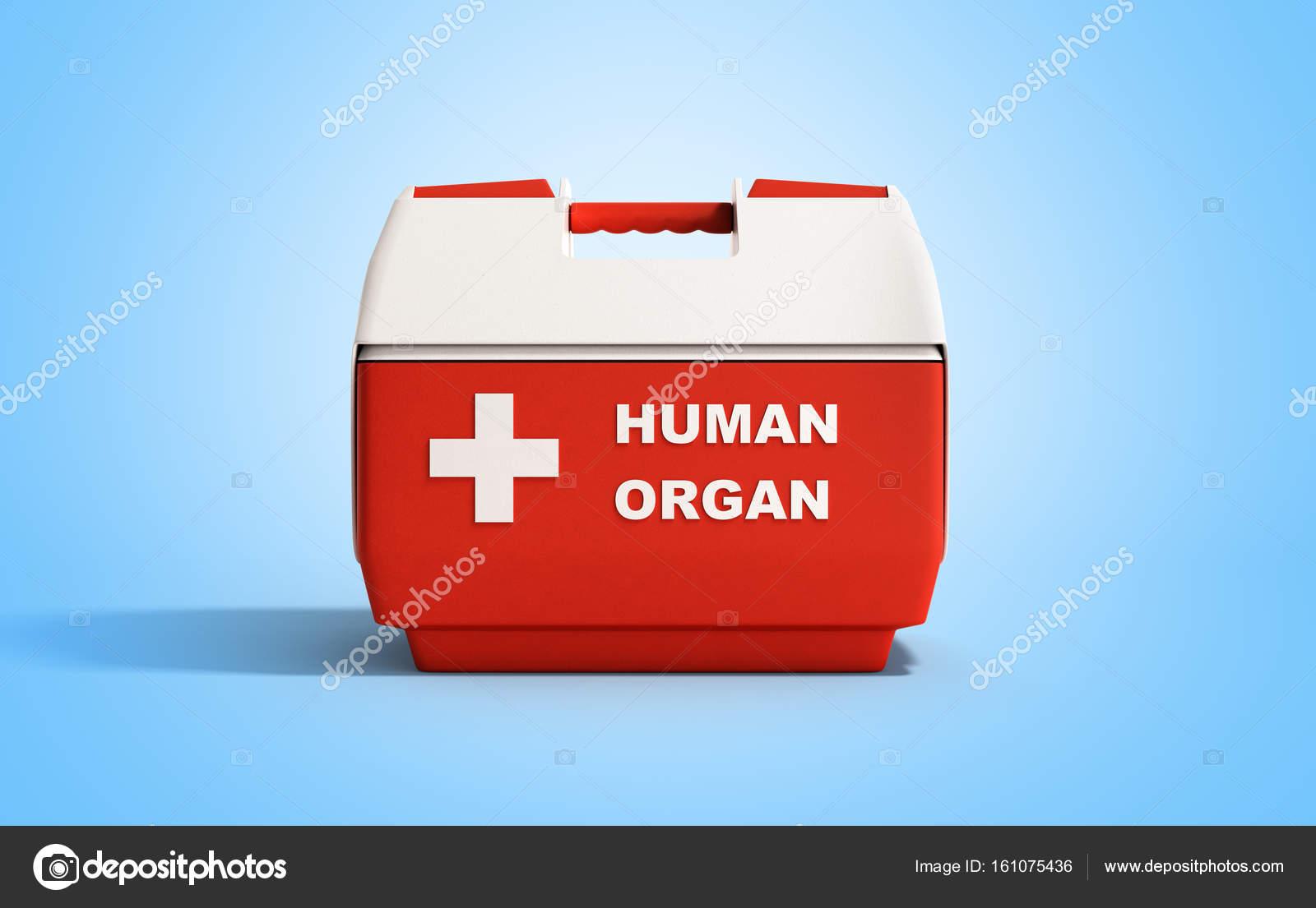 Kühlschrank Rot : Geschlossenen menschliche organ kühlschrank box rot 3d render auf