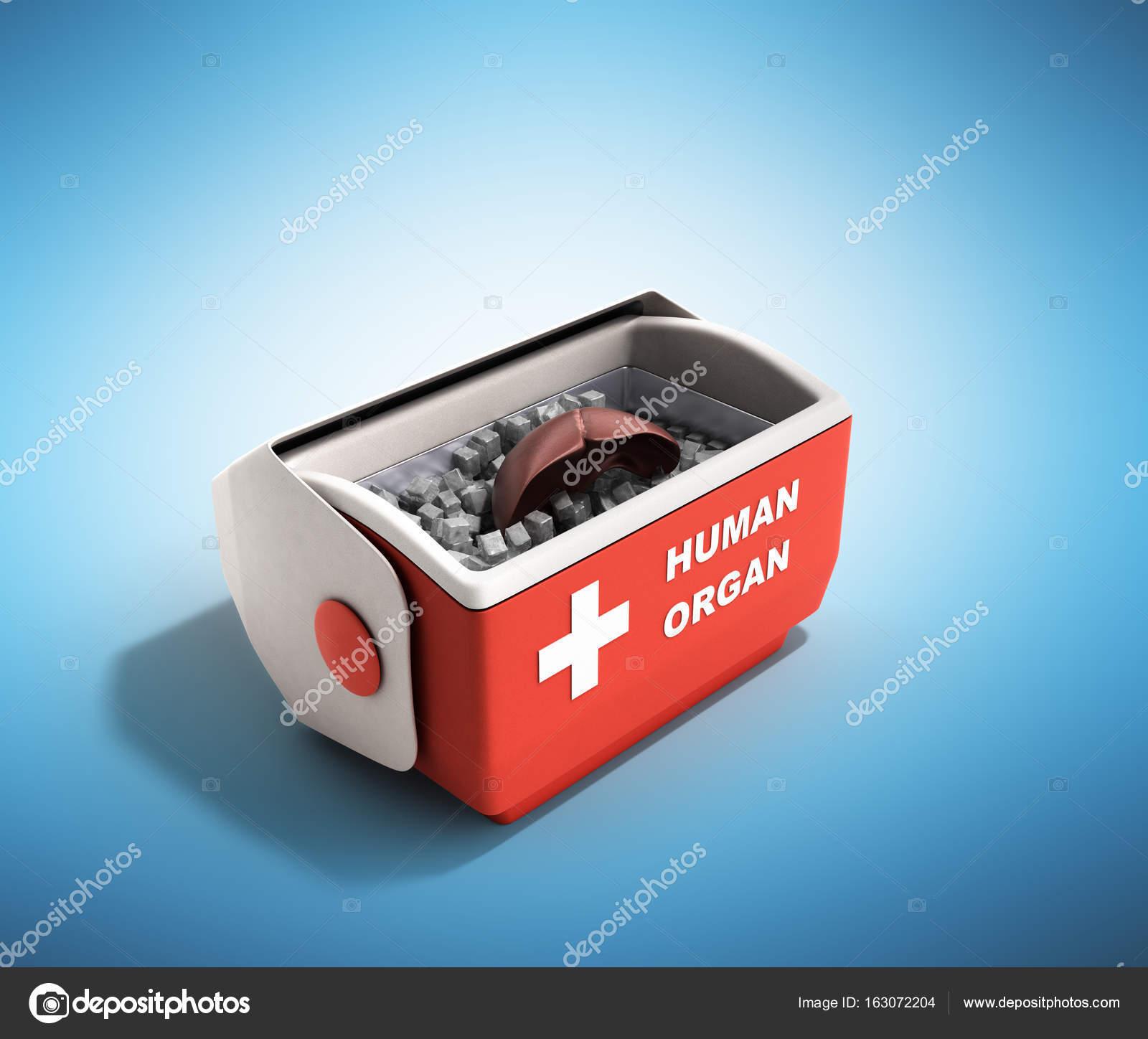 Orgel Transport Konzept offen menschliche Organ Kühlschrank Box r ...