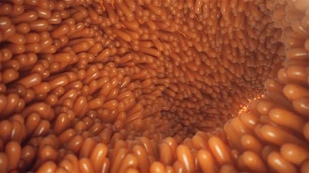 3D animace detail střevní klky. Střevní sliznice. Mikroskopické klky a kapilární. Lidská střeva. Pojem zdravá nebo nemocná střeva