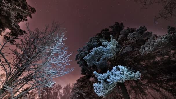 Rotace hvězd na fialové obloze v zimě v lese